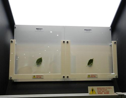 左が通常のガラス基板、右が開発品。外光がほとんど反射されないためガラス基板の存在が分からない