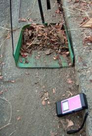 放射線量が高い枯れ葉を集めるだけでも除染につながる(福島市)