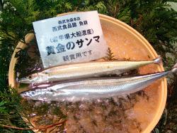 岩手・大船渡産の黄金のサンマに築地市場で1匹1万円の値が付いた=3日