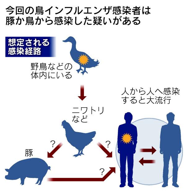 鳥インフル、人から人なら大流行も(Q&A)
