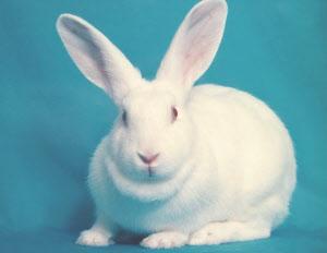 ウサギの画像 p1_1