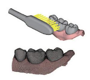 図2 ライオンによる歯磨きブラッシングのシミュレーション 歯ブラシの毛を全て表現したモデルで、歯のモデルの表面を、所定の力と速度でこするシミュレーションを実行した。歯のモデルは、歯科用の模型を3Dスキャナーで読み込んで作成した。