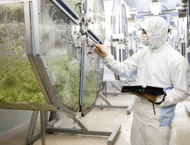 栽培容器のなかで野菜を育てる村上農園の植物工場