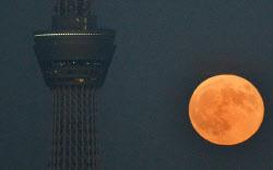 東京スカイツリーの脇に浮かんだ「スーパームーン」(28日午後、東京都文京区から望む)=写真 井上昭義