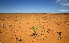 乾ききった畑のあと(南アフリカ中部の自由州)=ロイター
