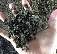 バイオマス発電の燃料となるヤシの実の殻