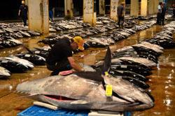 日本の漁獲高はピーク時より大きく落ちこんでいる(那覇市の泊市場)