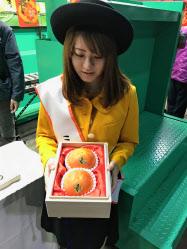 2016年の初セリの1.7倍の値が付いた岐阜県産の柿「天下富舞」(10月26日午前、愛知県豊山町)