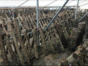 太陽光パネル下部の椎茸栽培スペース(出所:ネクストイノベーション)