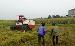 試験栽培を通じて、ベトナムに適したコメの品種を探る西部開発農産(ベトナム・イエンバイ省)