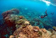 サンゴの保全に取り組む監視員ら=ロイター