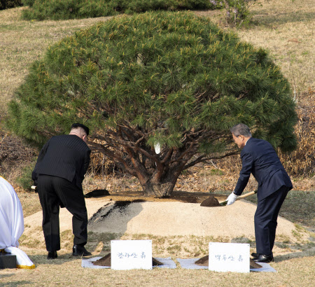 16時30分ごろ 記念植樹する韓国の文大統領(右)と北朝鮮の金委員長=代表撮影・AP