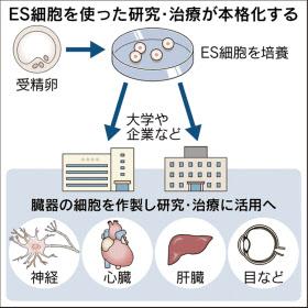 ES細胞7月にも配布 京大、再生医療応用に弾み