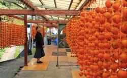 農家の軒先に玉すだれ状につるされた串柿(10日、和歌山県かつらぎ町)=共同