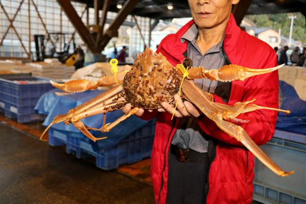 日本海カニ産地、ブランド磨く 最高ランクやギネス  :日本経済新聞