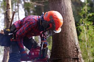森林資源の活用が急務になっている(林野庁提供)