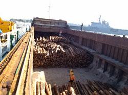 木材輸出最多の志布志港(鹿児島県志布志市)からは中国向けの丸太輸出が増えている