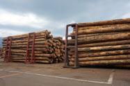 北米産丸太の価格は産地の供給減で底入れした