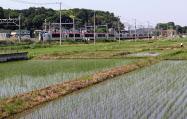 千葉県は作付面積が全国9位と首都圏有数の米どころだ(5月下旬、四街道市内)